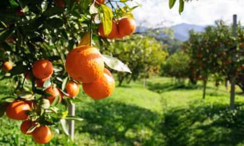 Hábitat del naranjo