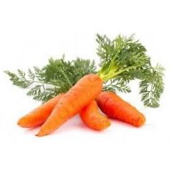 zanahoria huerto