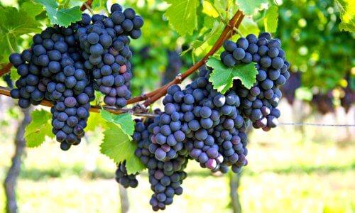 como es la uva