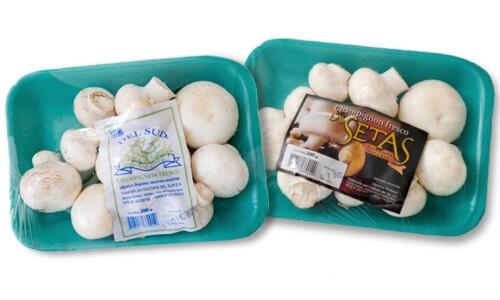 productores de champiñones u hongos