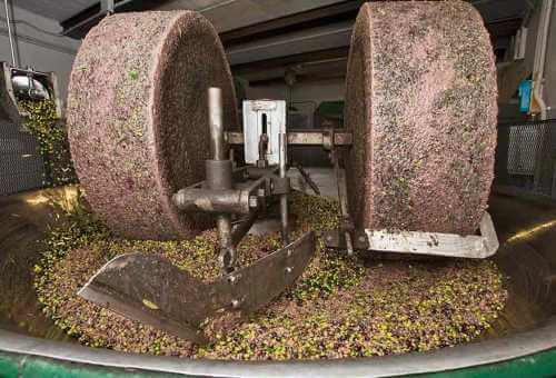 triturado aceite de oliva