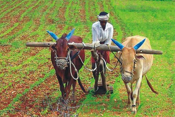 agricultura y ganadería historia