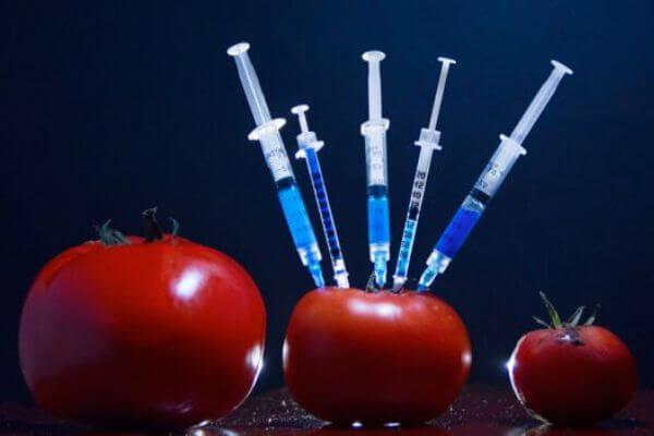 alimentos transgénicos características